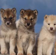 Section école du chiot Club canin de Rosny sur Seine