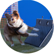 Section Flyball de Rosny-sur-Seine